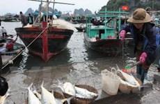 Kiên Giang phát triển kinh tế biển hiệu quả, bền vững