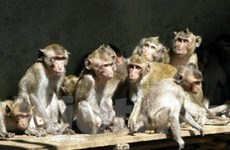 HN: Nâng cao quản lý cơ sở nuôi động vật hoang dã