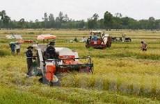 Sản xuất lúa Nam Bộ tăng cả diện tích và sản lượng
