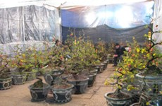 Hơn 200 gian hàng trong Hội chợ Xuân Tân Mão