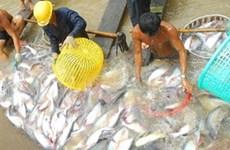 Thúc đẩy áp dụng VietGAP trong nuôi trồng thủy sản