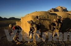 SITE: Taliban không có kế hoạch tấn công Mỹ