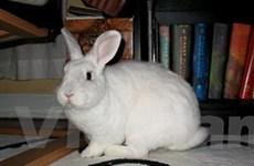 Thỏ cũng nghiện... xem phim Hàn Quốc