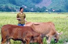 30,5 triệu euro hỗ trợ khu vực kinh tế nông thôn