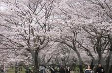 Du khách đến Nhật giảm lần đầu trong 6 năm