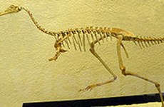 Lần đầu phát hiện hóa thạch khủng long Mononykus