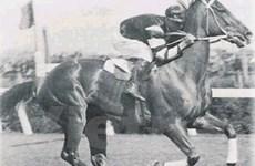 Australia muốn hồi hương ngựa đua Tia chớp