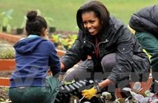"""Bà Michelle Obama """"múa bút"""" về khu vườn Nhà Trắng"""