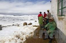Nam Phi: Hàng chục người thương vong do băng tuyết