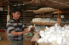 Tour du lịch độc đáo cho khách quốc tế ở Lâm Đồng
