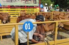 Prudential VN tài trợ trên 1 tỷ đồng mua bò giống