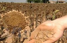 Hạn hán tại Italy gây thiệt hại lên tới... 1 tỷ euro
