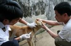 Phú Thọ khẩn trương triển khai phòng chống bệnh dại