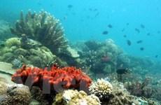 Mỹ-Indonesia bảo vệ đa dạng sinh học tam giác san hô