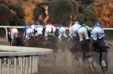 Ngựa đua của trùm ma túy được bán 8,8 triệu USD