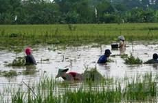 Lũ lụt lớn gây thiệt hại nghiêm trọng tại Indonesia