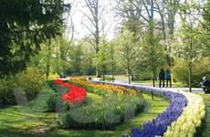 Thiên đường hoa tại Hà Lan - Công viên Keukenhof