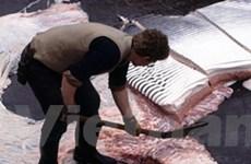 Tranh cãi về đánh cá, Iceland sẽ từ chối gia nhập EU