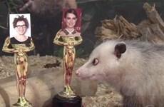 Chuột mắt lác Heidi vẫn sẽ có mặt ở Oscars 2011