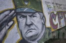 Serbia sẽ trừng phạt những người che giấu Mladic