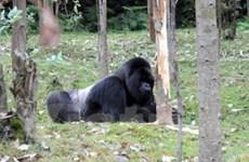 3,3 triệu USD để bảo tồn... khỉ đột, vẹt mào và ếch