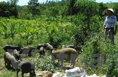 WB giúp Đắk Lắk phát triển sản phẩm nông nghiệp