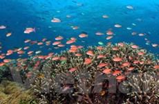 Bảo vệ đa dạng sinh học vùng biển quốc tế