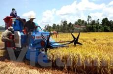 Bạc Liêu: Gạo tăng giá nhưng không thiếu hàng
