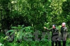 VN lập nhóm FLEGT để đẩy mạnh quản lý rừng