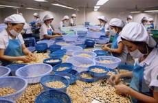 Giá thu mua hạt điều nguyên liệu tăng hơn 50%