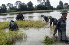 Thanh Hóa: Hơn 5.000ha lúa mùa bị ngập do mưa lớn