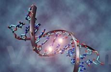Thay đổi ADN sẽ giúp phụ nữ sống đến 115 năm