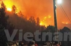Pháp: Hơn 4.200ha rừng tại đảo Corse bị thiêu rụi