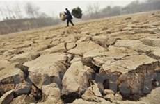 Hạn hán ở Trung Quốc: Trĩu nặng những lưng gầy