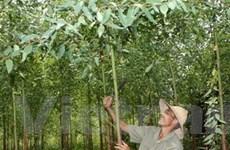 Agribank phục vụ Dự án phát triển ngành lâm nghiệp