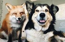 Khoảnh khắc dễ thương về tình bạn kỳ lạ giữa các loài vật khác biệt