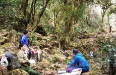 [Photo] Đỉnh Tả Liên: Khu rừng nguyên sinh đẹp độc đáo đầy ma mị