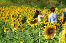 [Photo] Đà Lạt: Những sắc màu đẹp khó cưỡng ở xứ sở ngàn hoa