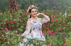 Sapa: Chiêm ngưỡng thung lũng hoa hồng tuyệt đẹp lớn nhất Việt Nam