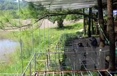 Xử lý dứt điểm việc xâm lấn đất rừng làm du lịch ở Uông Bí