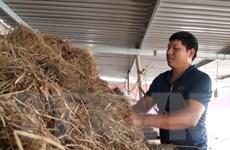 Nông dân Quảng Bình khôi phục sản xuất, tái thiết cuộc sống sau bão lũ