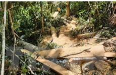 Gia Lai: Phát hiện vụ phá rừng trái phép tại huyện Mang Yang