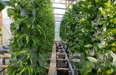 Mô hình vườn rau khí canh sử dụng điện Mặt Trời tại Lâm Đồng