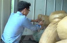 Hưng Yên bắt giữ và tiêu hủy hơn 2 tấn nội tạng lợn hôi thối