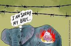 Xúc động với những bức tranh tưởng niệm voi mẹ chết thảm tại Ấn Độ
