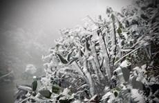 Yên Bái: Hình ảnh sương muối, băng giá trên đỉnh đèo Khau Phạ