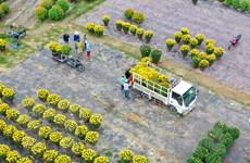 Rực rỡ hương sắc tại các làng hoa nổi tiếng của ba miền đất nước