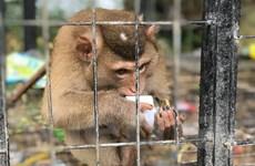 Cần giải quyết nạn tham nhũng và hối lộ từ tội phạm động vật hoang dã