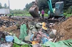 Tiêu hủy hơn 1,6 tấn nầm lợn nhập lậu, bốc mùi hôi thối