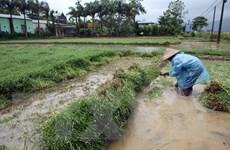 Điện Biên: Cơn mưa vàng giải hạn sau những ngày nắng nóng